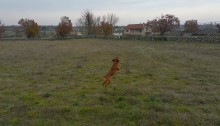 Pasear un perro con un Dron